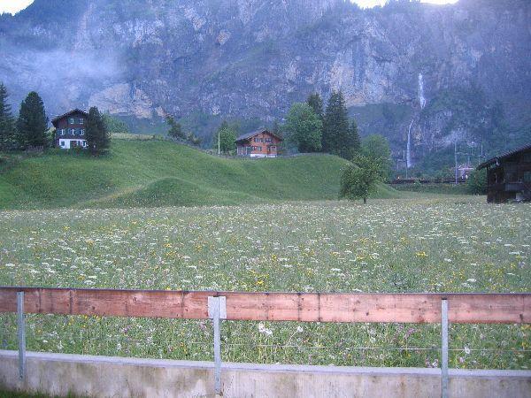 Wiese in Kandersteg