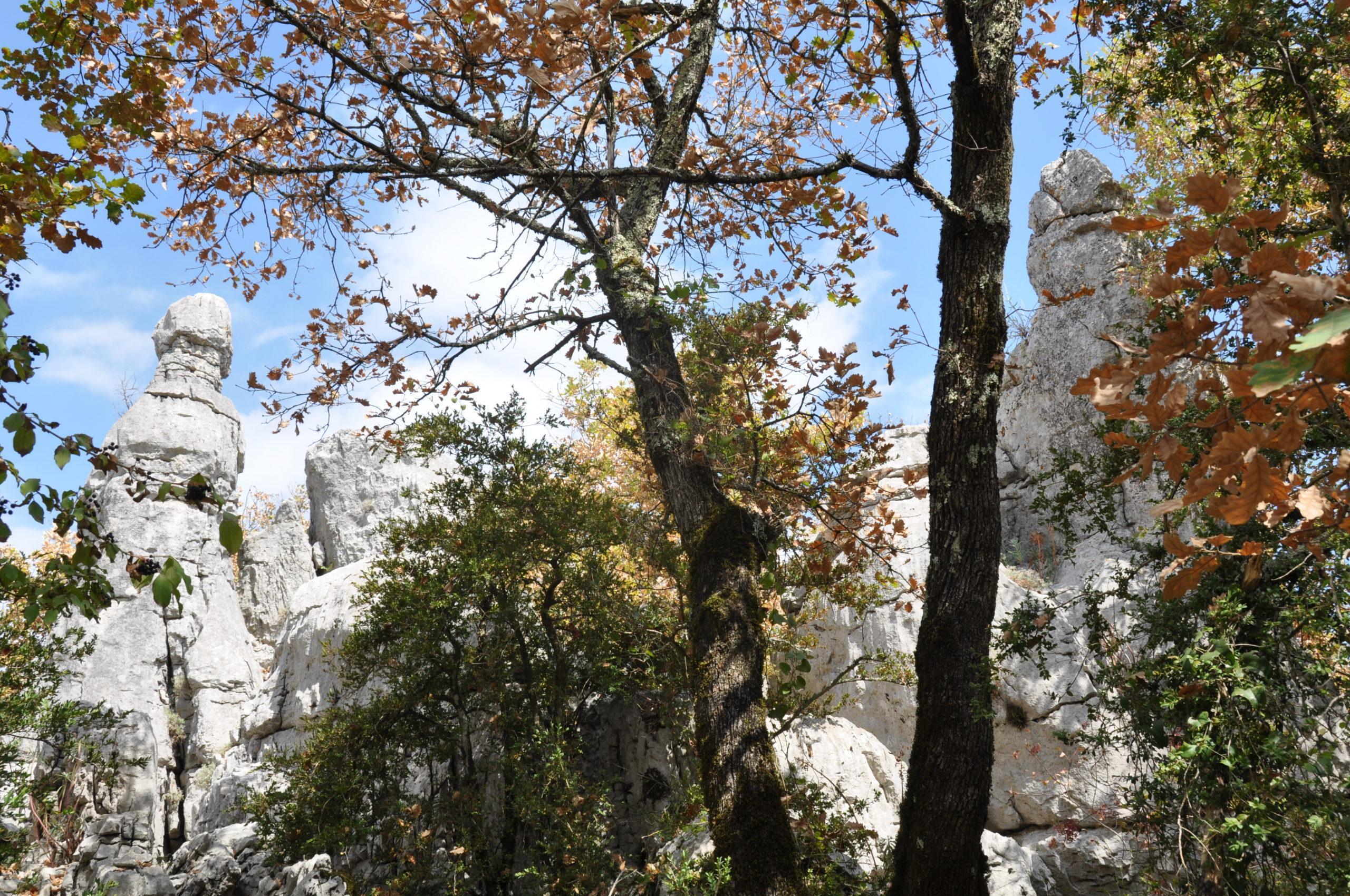 Bois de Paiolive, nahe den Trois Seigneurs