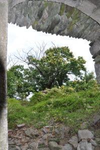 Kastanienhain in Les Alauzas