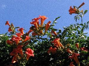 Pflanze in Castiglione