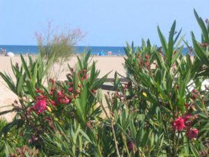 Blick auf den Strand von Les Ayguades