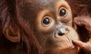 Steve Bloom: Primate