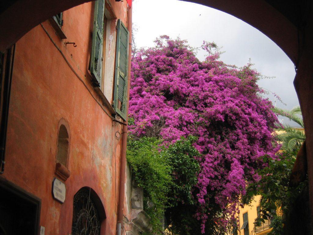 Blühende Bäume in Monterosso
